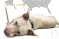 AMA-TV: Pet Insurance, Meeting Engagement, and Digital Marketing